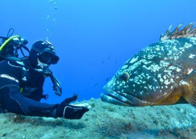 scuba-libre-plongee-bonifacio-mérouville