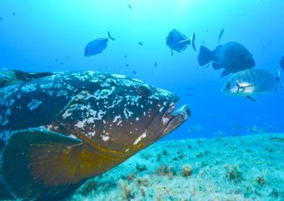scuba-libre-plongee-bonifacio-_ESB5781