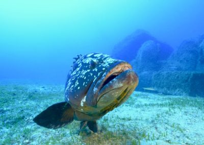 scuba-libre-plongee-bonifacio-mérouville2
